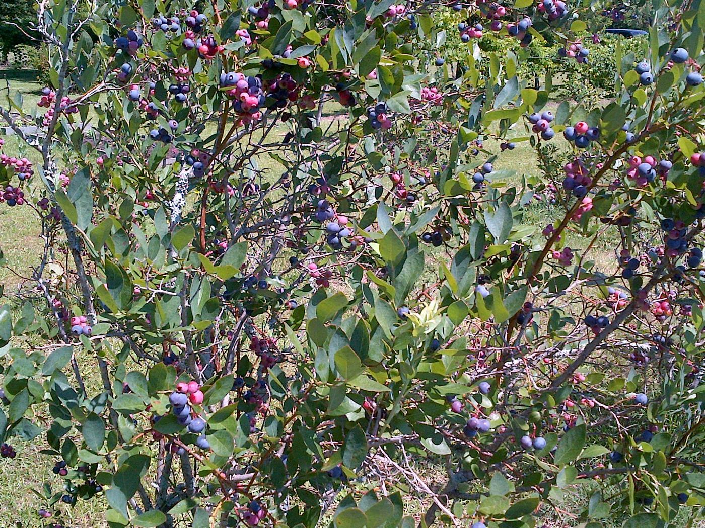 Le Farm - Hartsville, South Carolina, United States, Organic